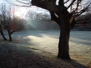abbaye royale winter morning